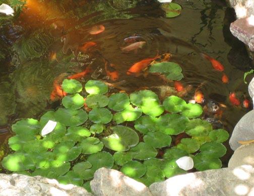 Pond inhabitants for 1500 gallon koi pond
