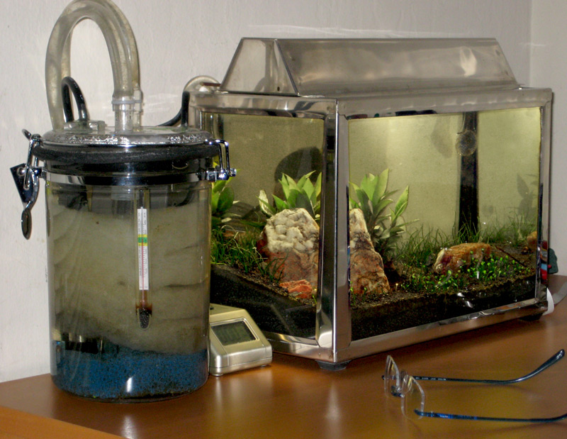 What is you filter set up s advanced captive care for Diy biological filter