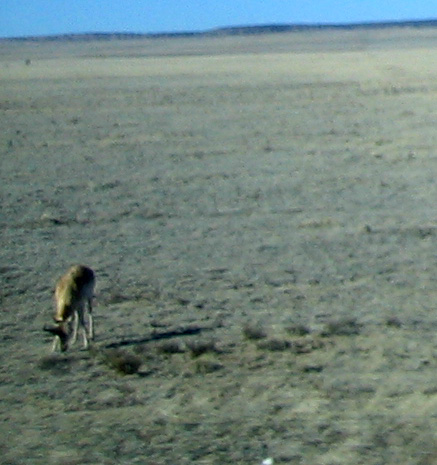 pronghorn NM